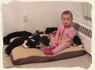 bernese mountain dog bernese mountain dog puppies. Black Bedroom Furniture Sets. Home Design Ideas